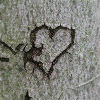Ein Herz im Baum